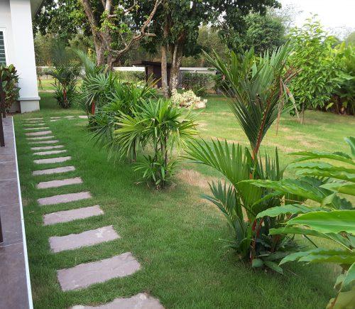 Thai Lady Palm